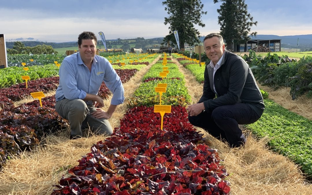 EAST GIPPSLAND VEGETABLE INNOVATION DAYS A GREAT SUCCESS: CHESTER