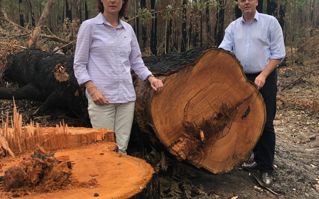 UP TO $5 MILLION AVAILABLE TO TIMBER PROCESSORS FROM FORESTRY RECOVERY FUND